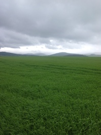 Looking north, Kirriemuir, Angus, June 2012
